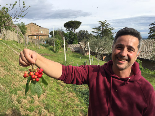 Enea holding a bunch of cherries